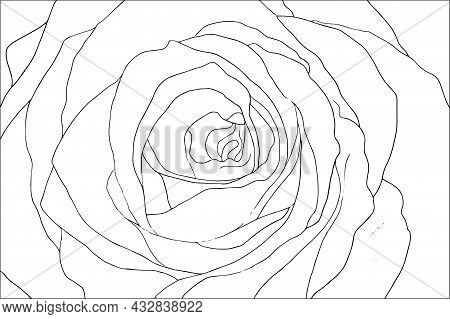 Black And White Handdrawn Outline Vector Coloring Book Page For Adults And Children. Flowers Roses W