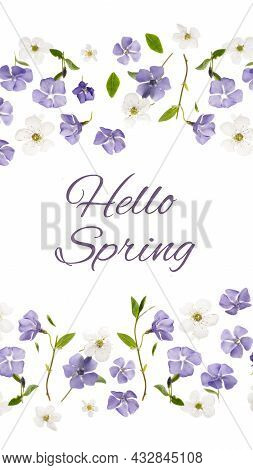 Hello Spring Vertical Banner With Beautiful Periwinkle Flowers And Fresh Spring Foliage Against Whit