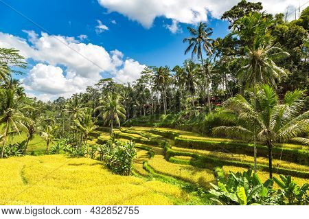Tegallalang Rice Terrace Field On Bali, Indonesia In A Sunny Day