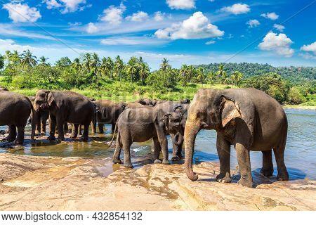 Herd Of Elephants At The Elephant Orphanage In Sri Lanka