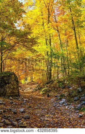 Slovenia, Logarska Valley. Magnificent golden autumn in the mountains. The path is strewn with autumn leaves of aspens and birches. Path in the forest. Lush wilting of nature