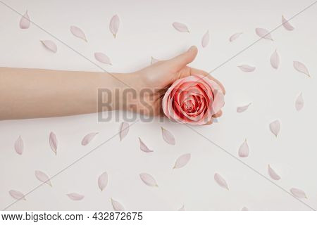 Beautiful Hands Of A Woman Holding A Rosebud Lying On A White Background. Concept Of Skin Care, Mois