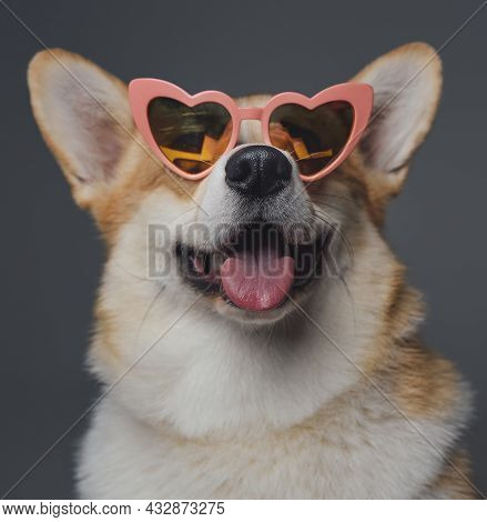 Cheerful Doggy With Heart Shaped Eyeglasses Against Gray Background