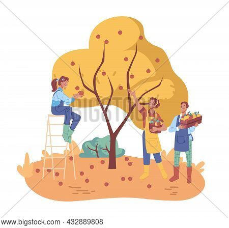 Farmers Collect Ripe Fruits From Trees, People Gather Apples Crop In Boxes, Flat Cartoon Characters.