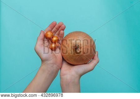 The Concept Of Comparing More And Less, The Concept Of Growth And Development. A Huge Onion Compared