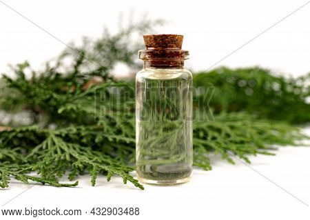 Cypress Essential Oil. Cypress Oil On Glass Bottle For Beauty, Skin Care, Wellness. Alternative Medi