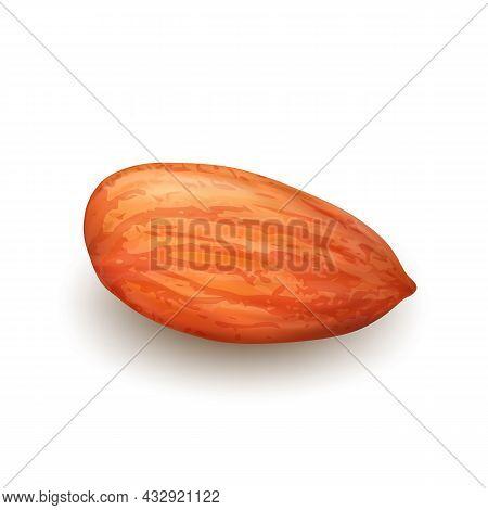 Almond Nut Kernel Vitamin Natural Food Vector. Organic Almond Nut Dietary Raw Vegan Nourishment. Hea