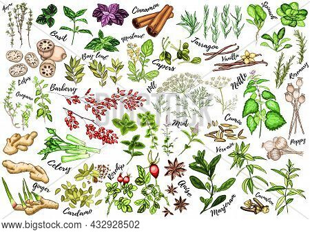 A Colorful Set Of Spices, Herbs And Spices. Bright, Colorful Hand Drawing. Vector For Menu, Restaura
