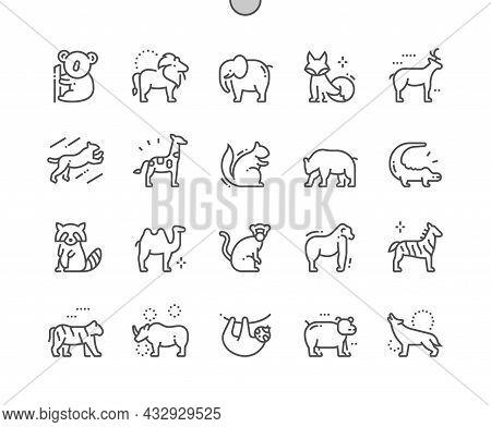 Animals. Mammal, Wildlife And Zoo. Leopard, Koala, Lion, Elephant, Fox, Squirrel, Bear, Crocodile, R