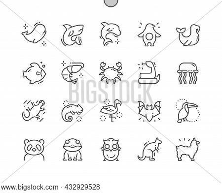 Animals. Zoo, Marine Animals And Mammals. Shark, Dolphin, Penguin, Fish, Snake, Jellyfish, Chameleon