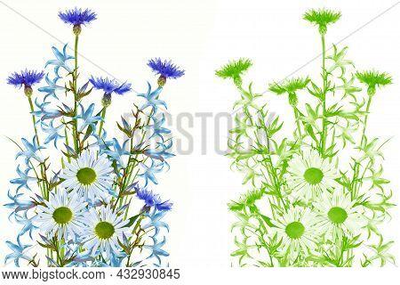 Wild Flower Cornflower, Chamomile Isolated On White Background. Wildflower