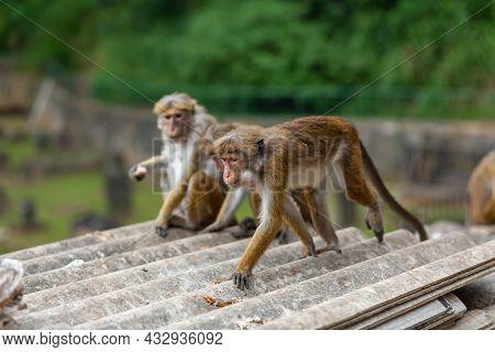 A Flock Of Monkeys Rummaging In A Junkyard