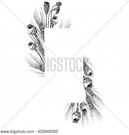 Wheat Spikelet And Poppy Seed Boxes Frame. Hand Drawn Vector Illustration Isolated On White Backgrou