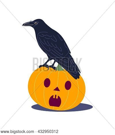 Old Crow Sitting On Halloween Pumpkin Isolated On White Background. Raven Bird With A Long Beak And