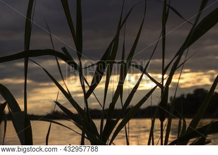 View Through The Reeds To The Reflection Of The Setting Sun In The Lake