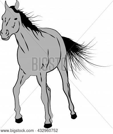 Sketch Style Running Horse Stallion Vector Illustration