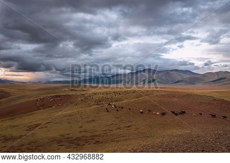 A Herd Of Goats And Sheep Returns To The Farm After Grazing In A Meadow In The Steppe Against A Back