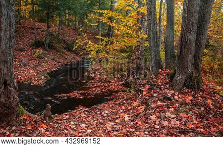 Autumn trees and fall foliage along small forest water stream in Michigan upper peninsula.