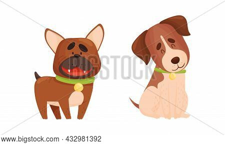 Funny Bulldog And Jack Russell Terrier Dog With Collar As Four-legged Friend And Domestic Pet Vector