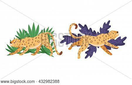 Spotted Leopard Or Jaguar With Yellow Skin Lying And Stretching In Tropical Leaves Vector Set