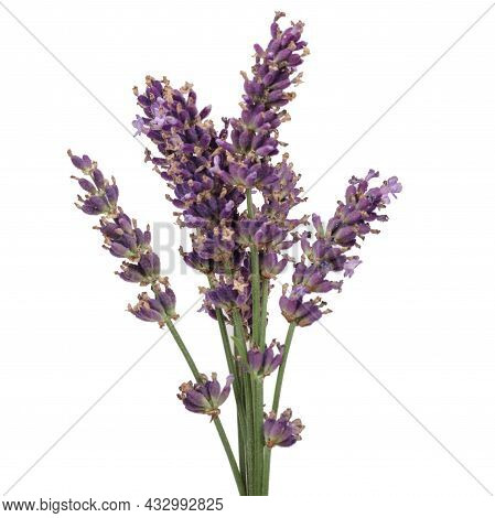 Lavender Flowers On A White Background. Isolated.