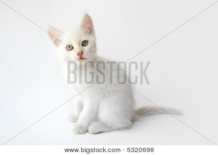 sitting cat isolated on the white background poster