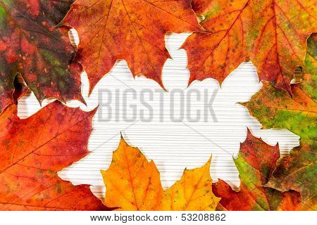 Colorufl autumn maple leaf on white background poster