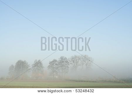 Distant Trees In Fog.