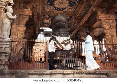 Thanjavur, India - Febr 13: Indian People Brings Offerings To Holy Nandi Bull As Shiva Personificati