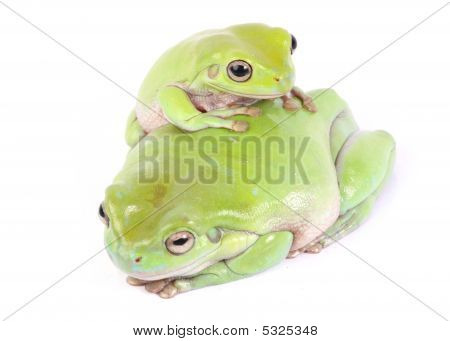a closeup photo of frog on white background poster