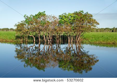 Trees with reflections, Yellow water billabong, Kakadu National Park, Northern Territory, Australia