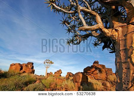 Desert landscape at sunrise with granite rocks and a quiver tree (Aloe dichotoma), Namibia, southern Africa