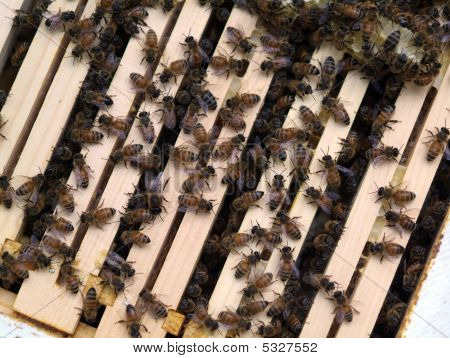 Honey Bee Hive