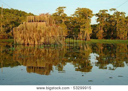 Duck Blind In Swamp