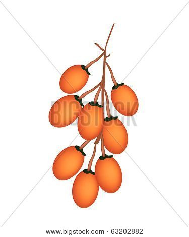 Ripe Betel Palm Fruit On White Background