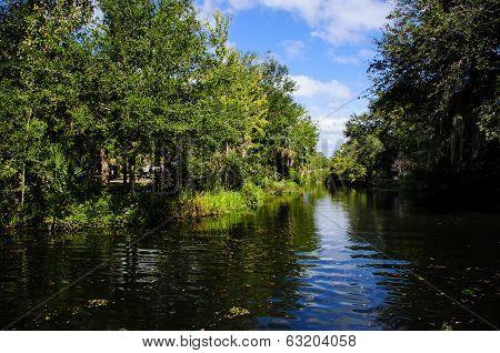 Waterway In The Swamp