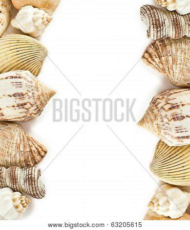 Shells frame on white