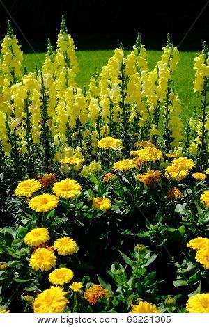 A Spring Garden