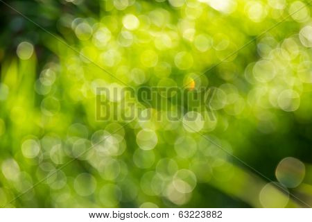 Abstract Light Of The Tree Leaves