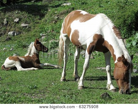 Horse And A Foal