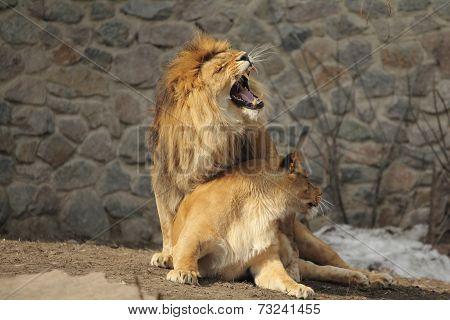 Lions Property