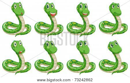 Illustration of the different snake expressions on a white background