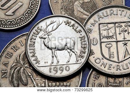 Coins of Mauritius. Mauritian rusa deer (Rusa timorensis) depicted in the Mauritian half rupee coin.