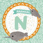 ABC animals N is narwhal. Childrens english alphabet. Vector illustration poster