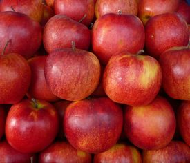 a lot of ripe red apples at each other cumulating
