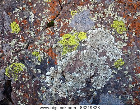 Crustose Lichen on a desert boulder in Eastern Washington poster