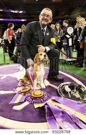 NEW YORK-FEB 17: Miss P, a 15-inch beagle and William Alexander after winning the Best in Show award at the 139th Annual Westminster Kennel Club Dog Show on February 17, 2015 in New York City.