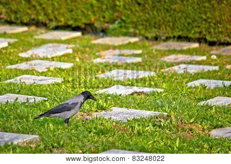 Crow On Unmarked Grave Scene