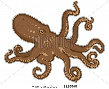 Octopus swimming isolated white background