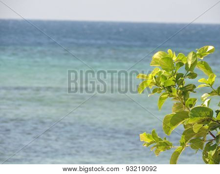 plant within ocean